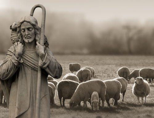 A Shepherdless Existance